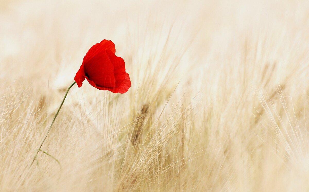 flower-100263_1920 (1) (1)