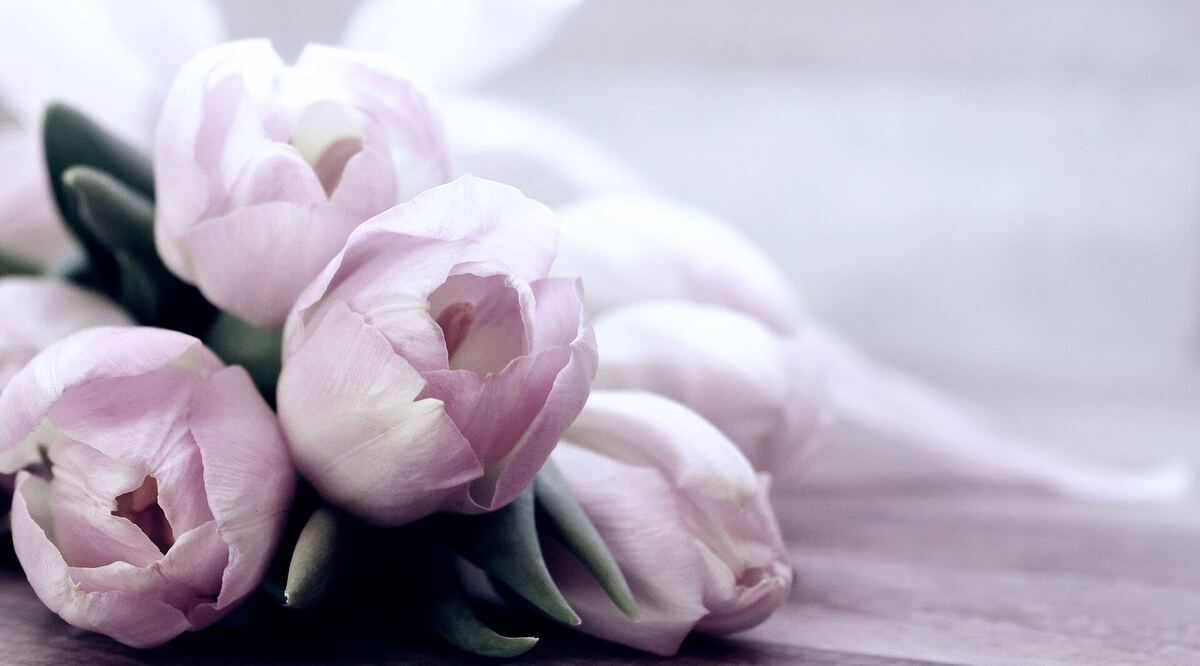 tulips-4072214_1920 (1)