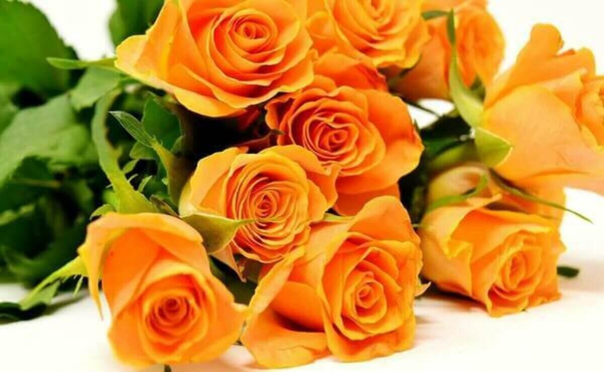 https://www.hadabiyou.com/wp/wp-content/uploads/2020/12/roses-3418141_1280-1-1.jpg