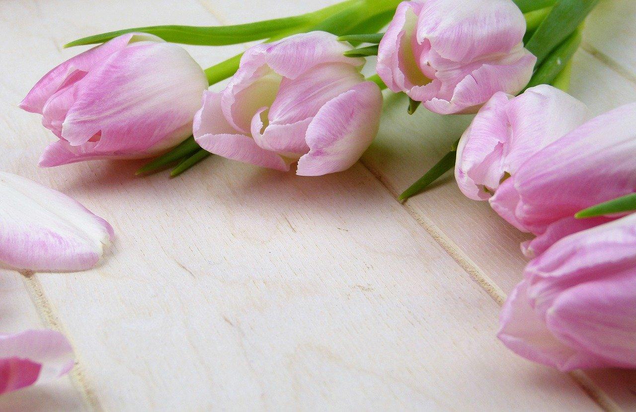 flower-3070161_1280