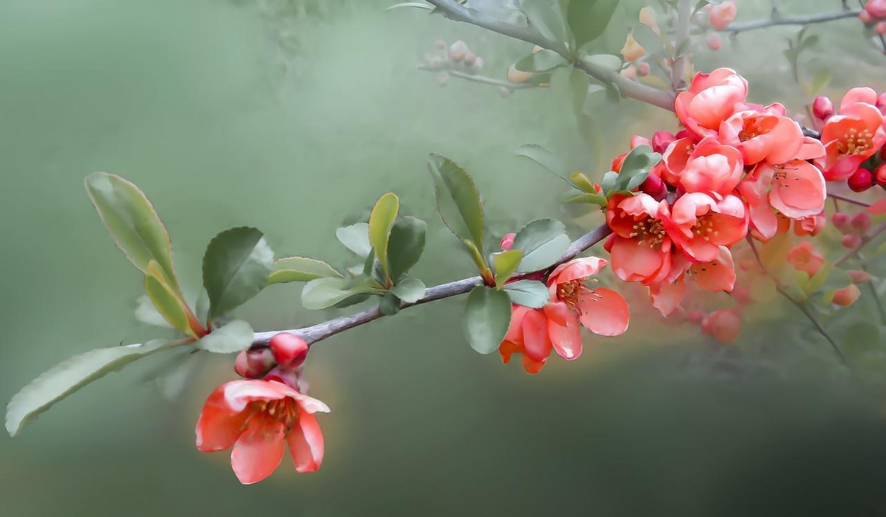 flower-4853422_1280