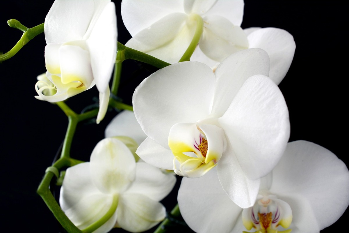 orchid-3097458_1280