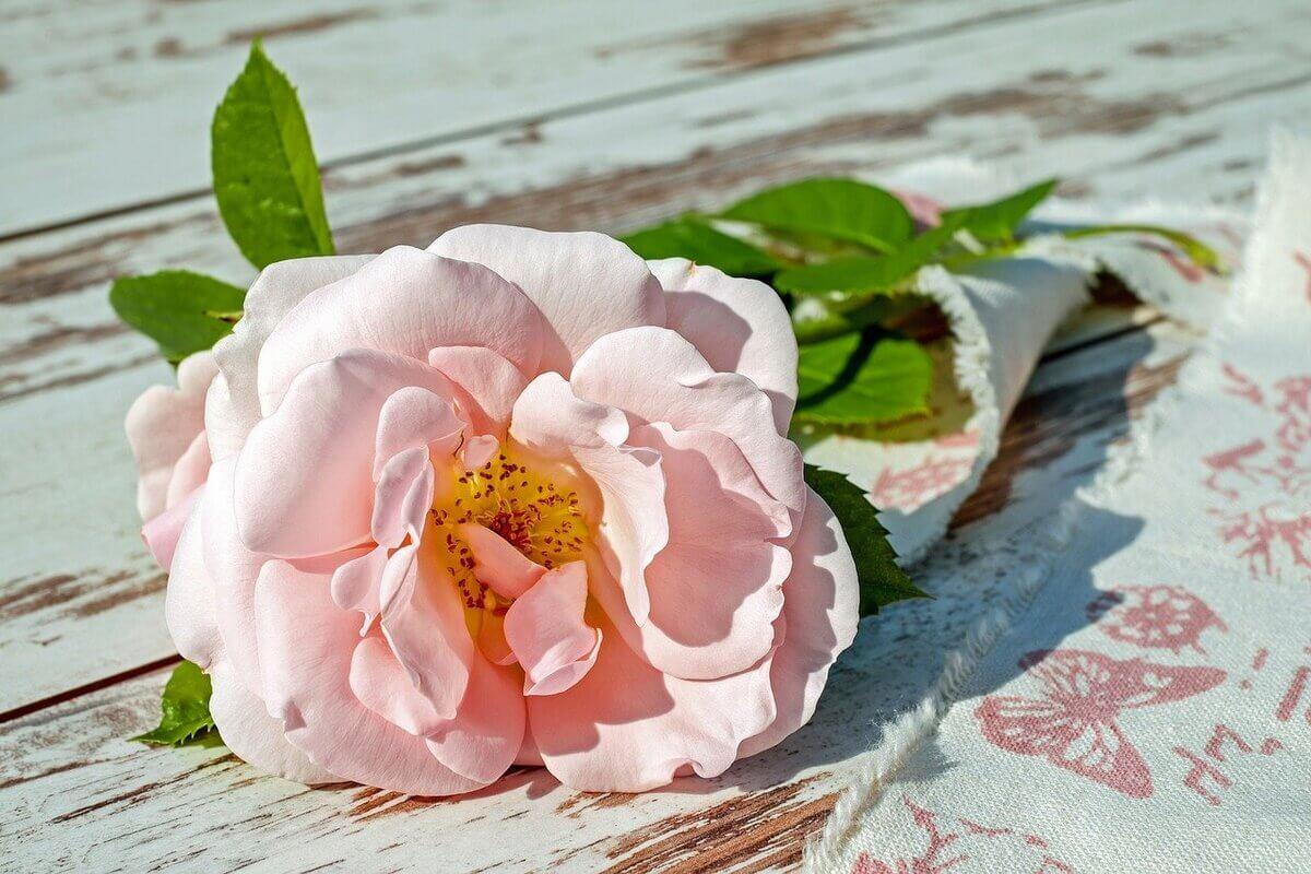 rose-2378156_1280