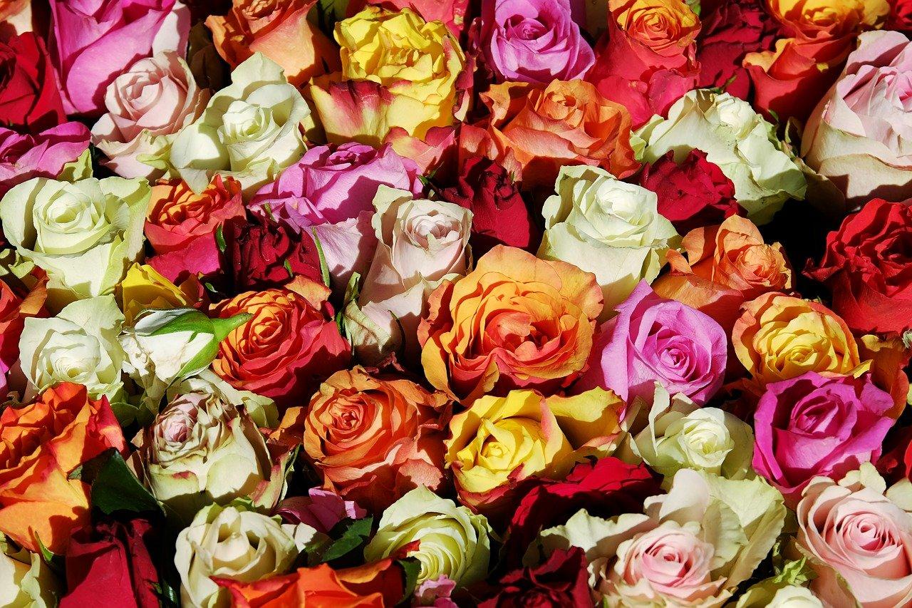 roses-3256796_1280