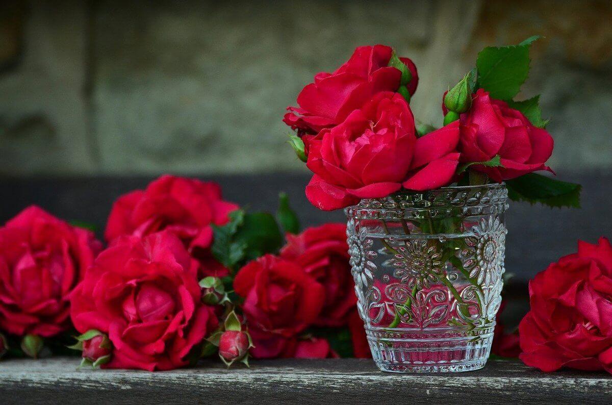 roses-821705_1280